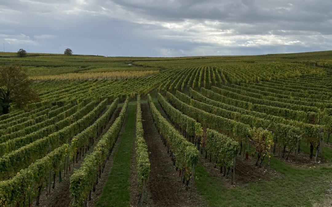 YES! De wijnreisgids over de Elzas wordt definitief uitgegeven!